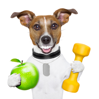 fitness and healthy dog