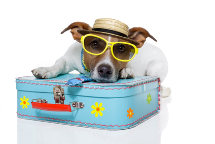 Dog as a tourist